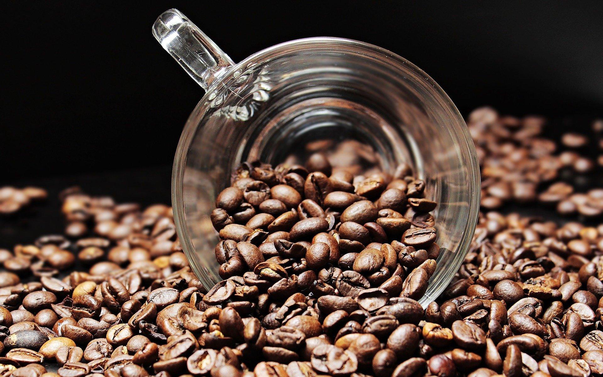 Cà phê Robusta trồng nhiều ở Tây Nguyên, Buôn Ma Thuột.