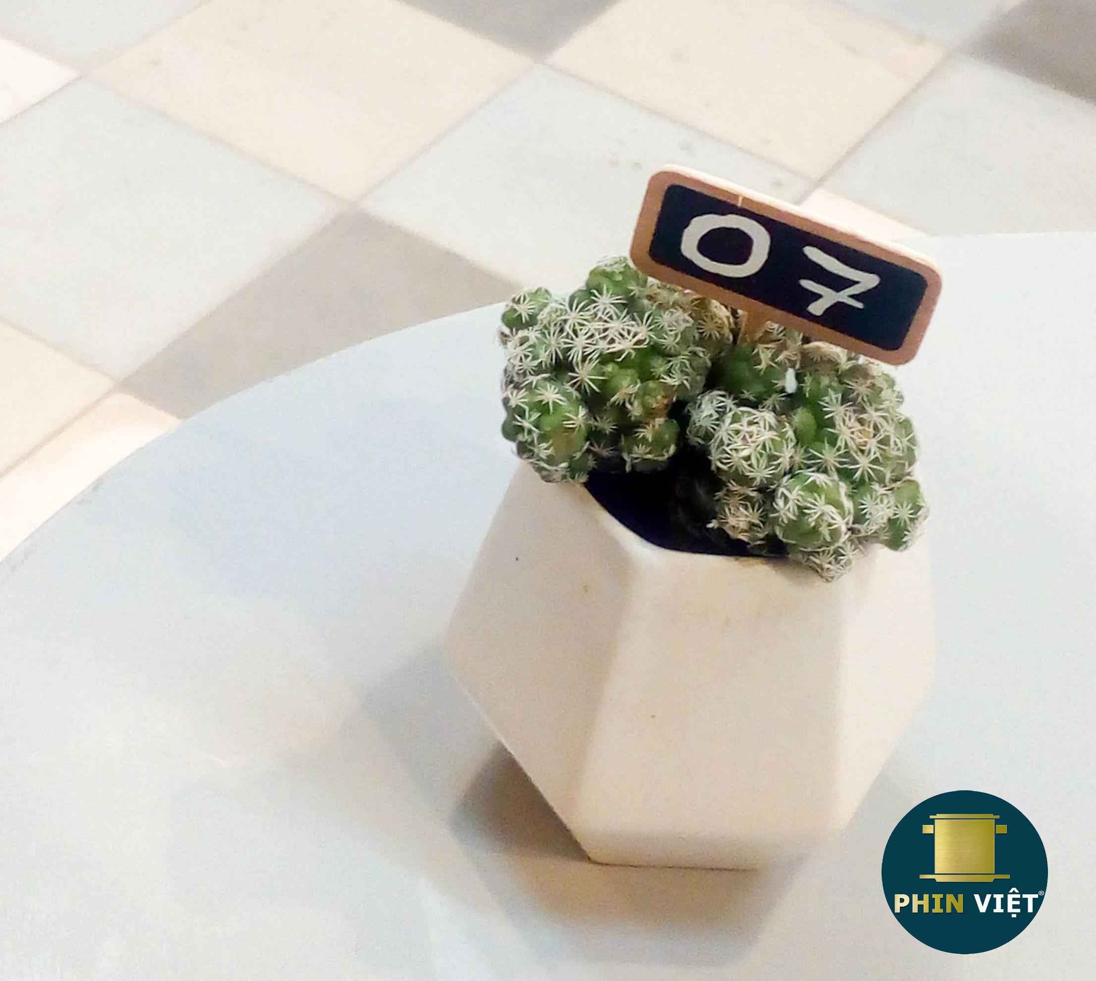 Trang trí số bàn bằng chậu cây nhỏ xinh